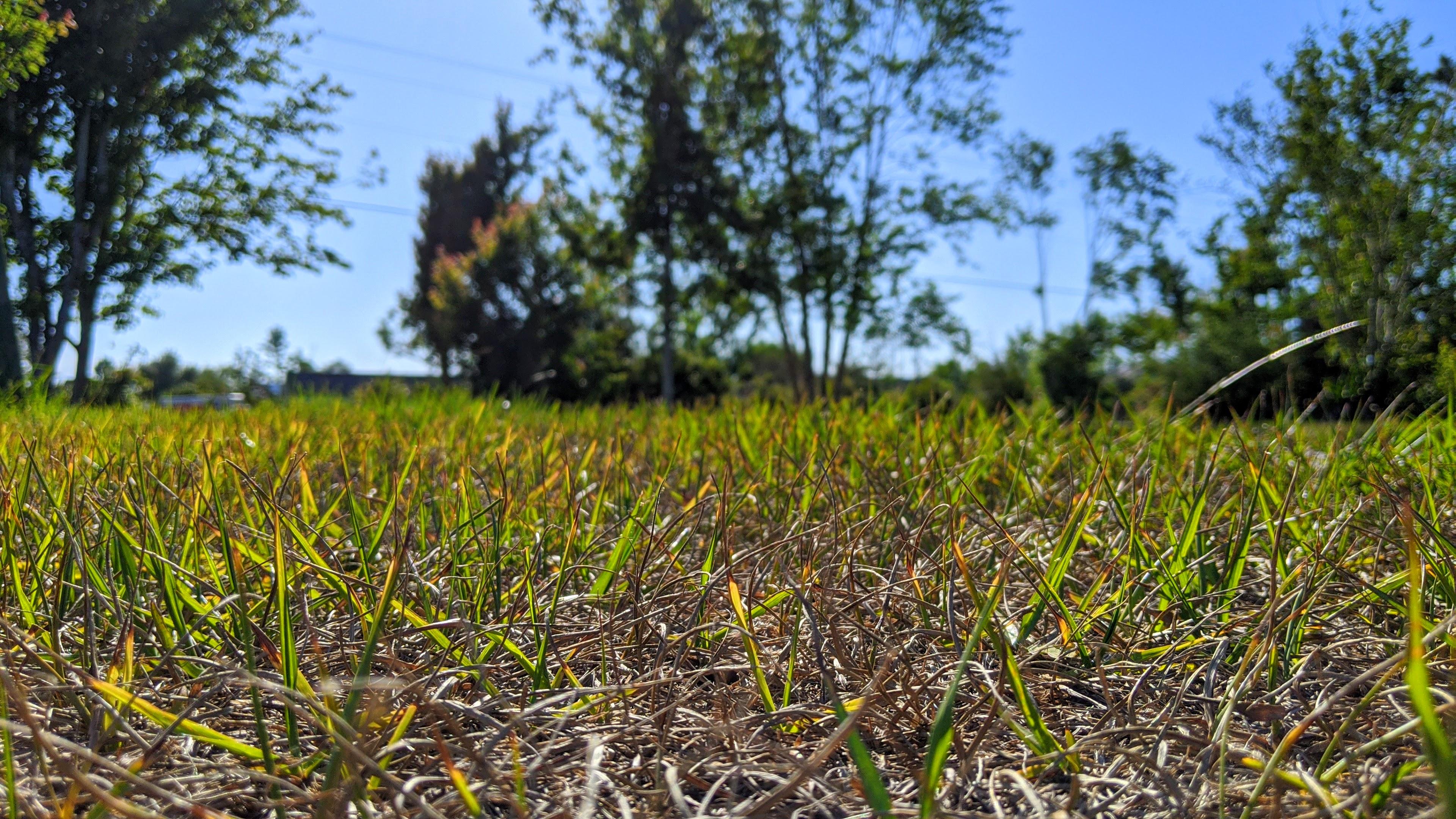 HomeDabbler | Dry grass in yard